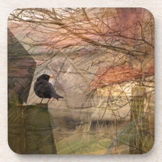 Blackbird Coasters