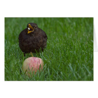 Blackbird eating card