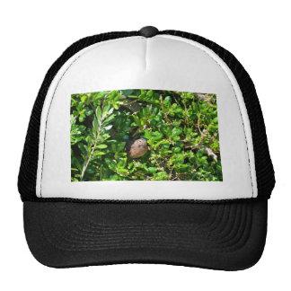 Blackbird in a laurel bush hat