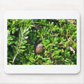 Blackbird in a laurel bush mouse pad
