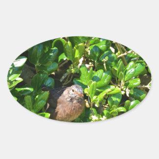 Blackbird in a laurel bush sticker