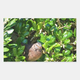 Blackbird in a laurel bush stickers