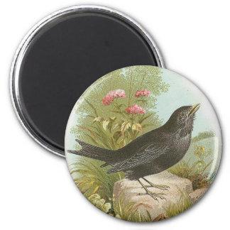 Blackbird Fridge Magnet