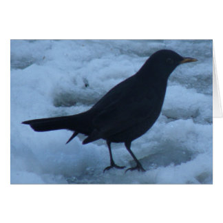 Blackbird on ice Greeting Card