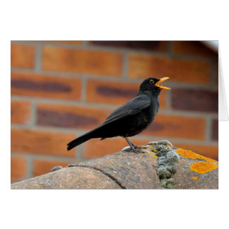 Blackbird singing blank greeting card