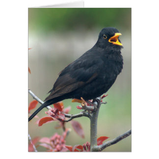 Blackbird sitting in a tree card