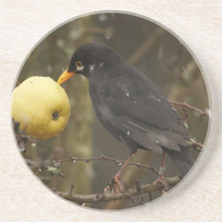 Blackbird with apple Coaster
