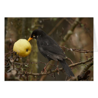 Blackbird with apple Greeting Card