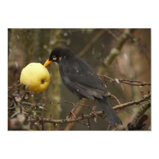 Blackbird with apple Invitation