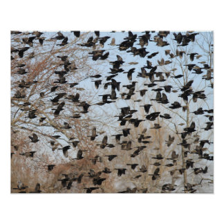 Blackbirds flocking nature photograph poster