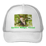Blackchinned Hummingbird Mesh Hat