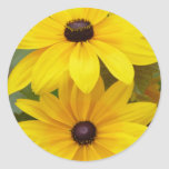 Blackeyed Susan Rudbeckia hirta f. homochroma Round Sticker