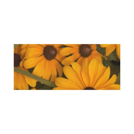 Blackeyed Susans on wrapped canvas. Gallery Wrap Canvas