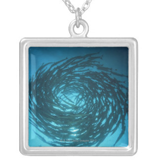 Blackfin barracuda swimming in circles silver plated necklace
