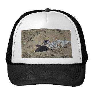 Blackfooted Ferret Hats