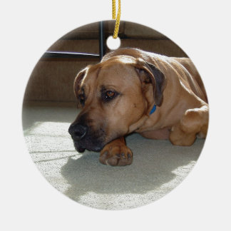 blackmouth cur laying christmas ornament