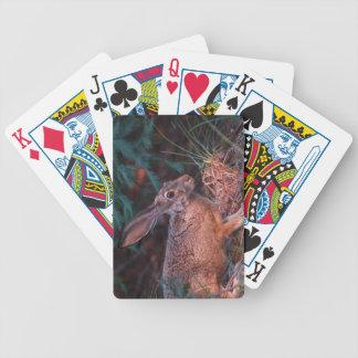 Blacktailed Jackrabbit Bicycle Poker Deck