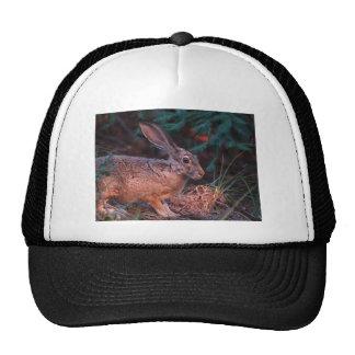Blacktailed Jackrabbit Trucker Hats