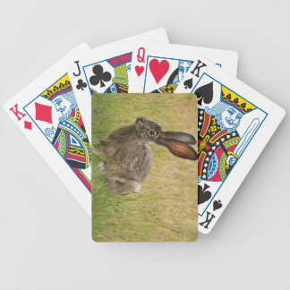 Blacktailed Jackrabbit in Field Playing Cards