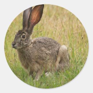 Blacktailed Jackrabbit in Field Round Sticker