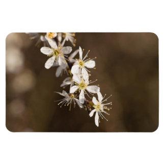Blackthorn Blossom Magnet