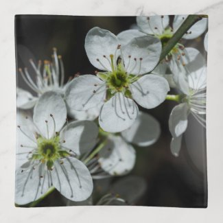 Blackthorn Blossom Trinket Tray