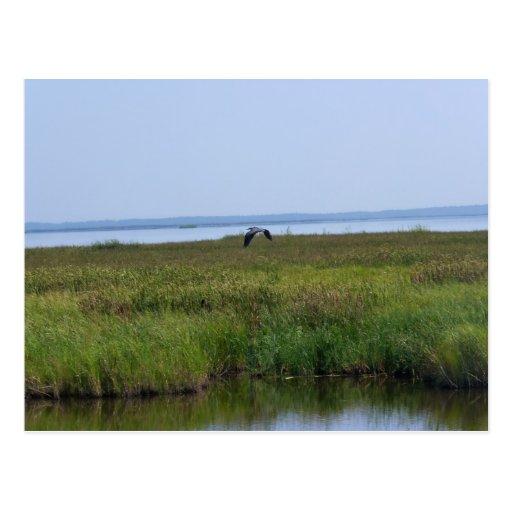 Blackwater National Wildlife Refuge Post Cards