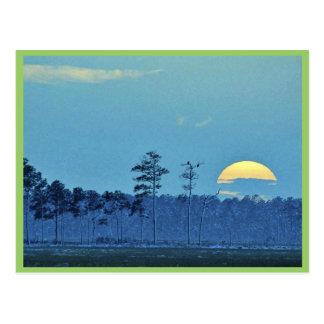 Blackwater National Wildlife Refuge Postcard