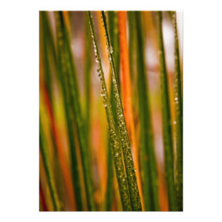 Blades of grass personalized invites