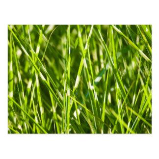 Blades of grass postcard