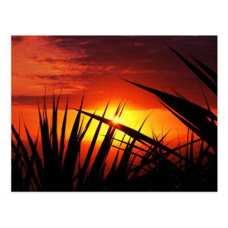 Blades of grass sunset beautiful scenery postcard