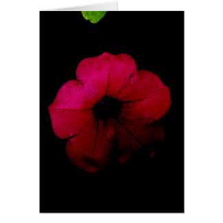 Blank-Black and Pink Greeting Card
