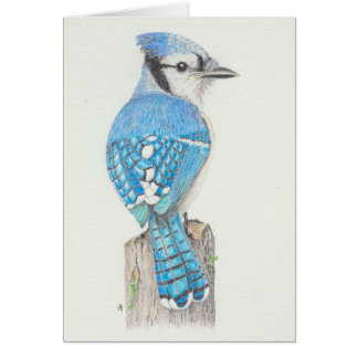 Blank Card - Blue Jay