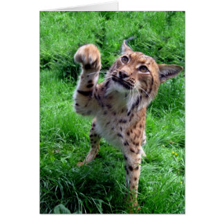 blank card - Carpathian lynx