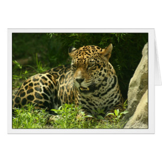 Blank Card- Jaguar Photo Card