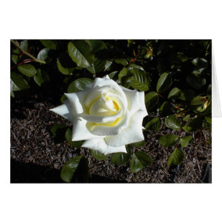 Blank card: One Pale Yellow Rose