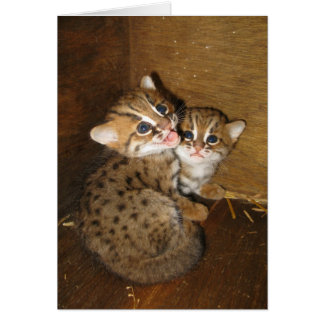 Blank card - Rusty spotted cat