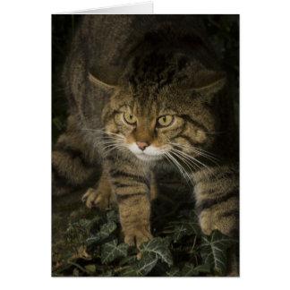 Blank card - Scottish wildcat 2