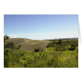 Blank Card: Templeton CA Wine Country
