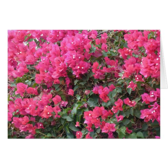 Blank card with beautiful pink bougainvillea
