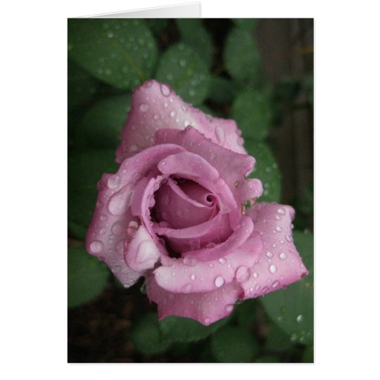 Blank-Dew Pink Rose Card