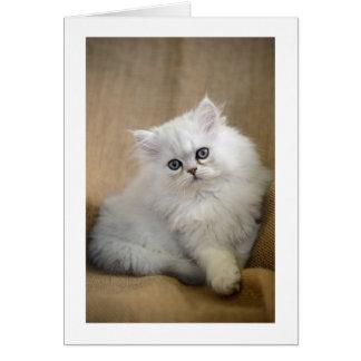 Blank Greetings Card: Fluffy Chinchilla Kitten Card