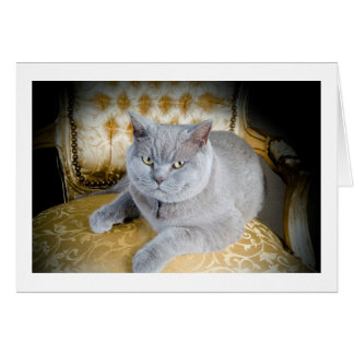 Blank Greetings Card: Grumpy Grey Cat! Card