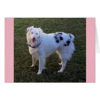 Blank Note card with Australian Shepherd