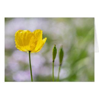 Blank Note Card - Yellow Welsh Poppy