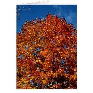 Blank_Orange Tree Top Fire Note Card