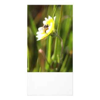 Blank Photo Card, Bumble Bee Photo Card Template