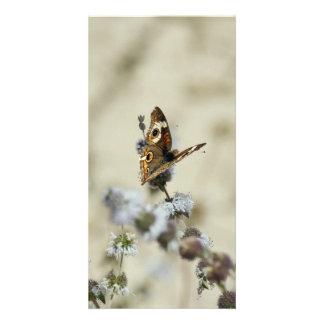 Blank Photo Card, Butterfly Custom Photo Card