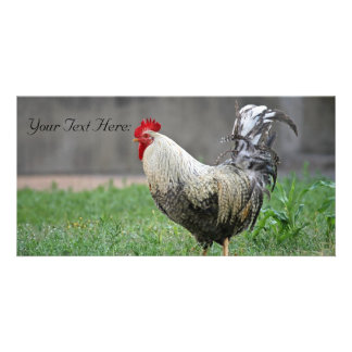 Blank Photo Card, Rooster Personalised Photo Card