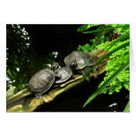 Blank-Turtles Rest Greeting Cards